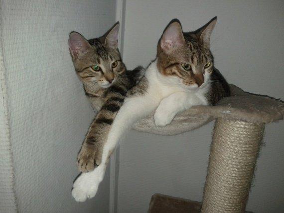 concours-entente-chats-uni-vie-img