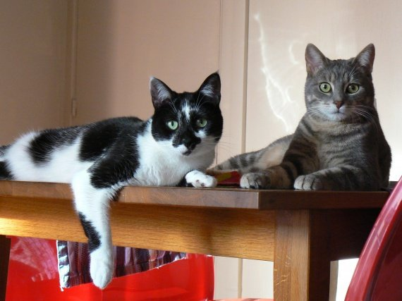 concours-entente-chats-photo-classe-img