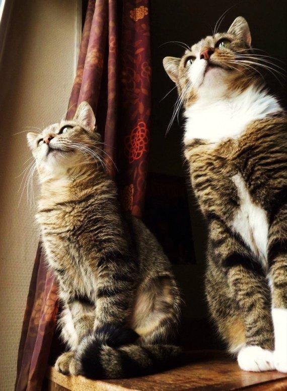 concours-entente-chats-zaza-visent-proie-img