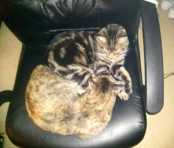 concours-entente-chats-ma-chaise-img