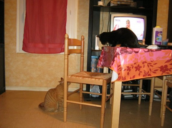 concours-entente-chats-feore-pleine-discution-img