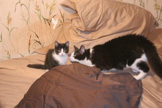 concours-entente-chats-pemiere-rencontre-agression-img