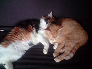 concours-entente-chats-bella-simba-img