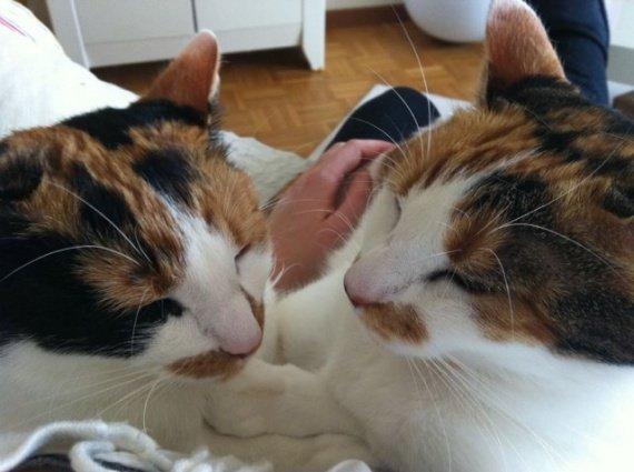 concours-entente-chats-bonnie-manson3-img