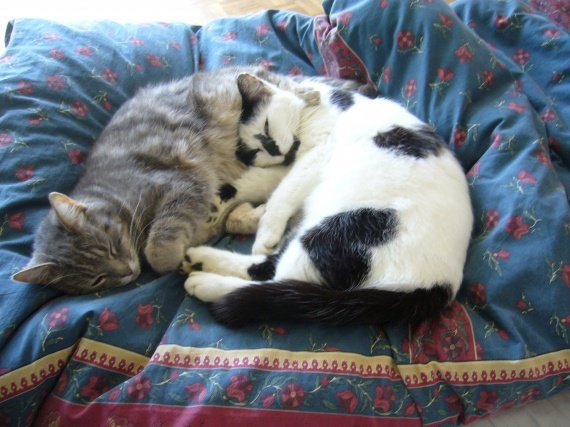 concours-entente-chats-calin-petite-forme-img