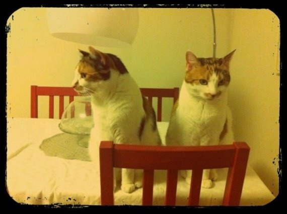 concours-entente-chats-a-table-img
