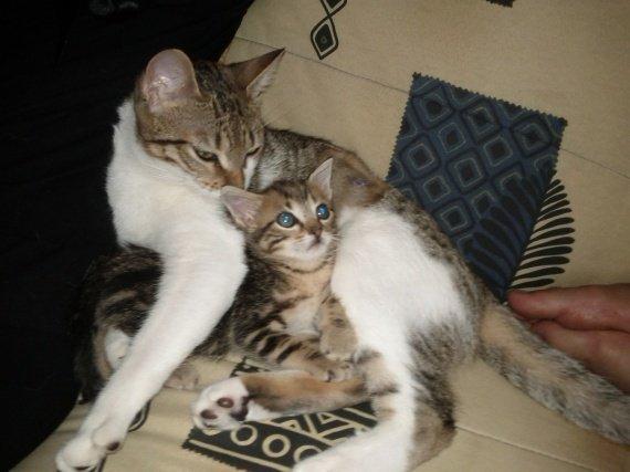 concours-entente-chats-peur-te-protege-img