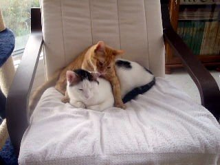 concours-entente-chats-bouge-te-lave-img