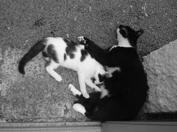 concours-entente-chats-petit-tendresse-adoptif-img
