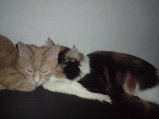 concours-entente-chats-simba-bella-img