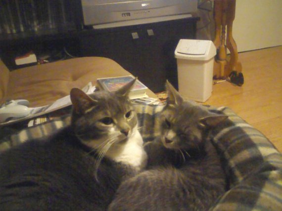 concours-entente-chats-panier-img
