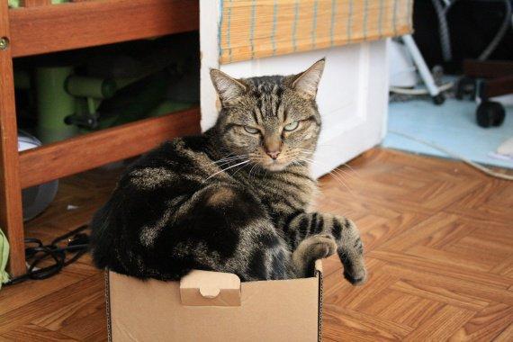 Chipie boîte
