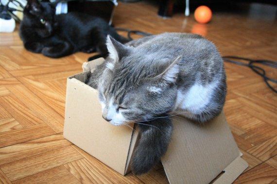 Gogor boîte