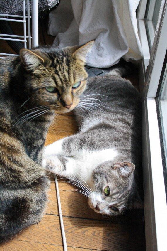 Gogor et Chipichou