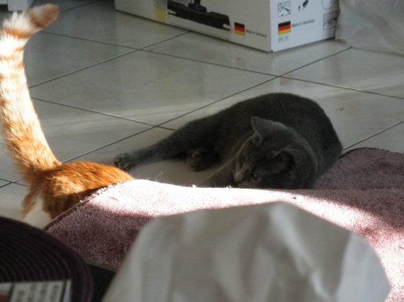 Y'a une bosse sous le tapis ?!