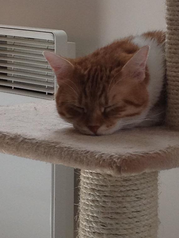 Dur la vie de chat