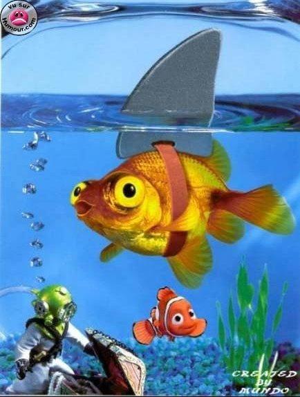 poisson requin-dents-mer-5590560de