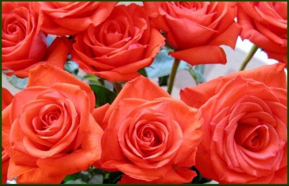 roses belles-orangees-56863773f5
