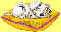 bonne nuit dalmatien