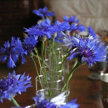 Bouquet de bleuets coucous et autres fleurs sauvages 2698741 photos club doctissimo - Bouquet de fleurs sauvages ...