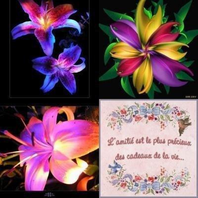 jolies couleurs