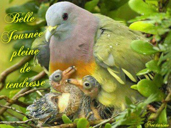 http://a.imdoc.fr/1/psychologie/tendresse-complicite-animaux/photo/6694610669/206159631d7/tendresse-complicite-animaux-default-img.jpg