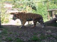 Zoo Amnéville 2012 013