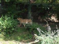 Zoo Amnéville 2012 021