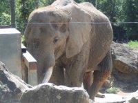 Zoo Amnéville 2012 035