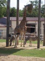 Zoo Amnéville 2012 043