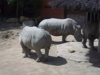 Zoo Amnéville 2012 047