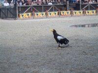 Zoo Amnéville 2012 107