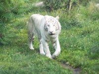Zoo Amnéville 2012 116
