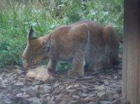 Zoo Amnéville 2012 120