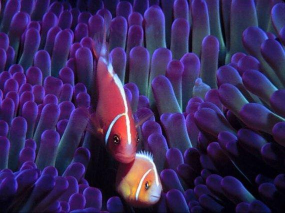 poissons-14