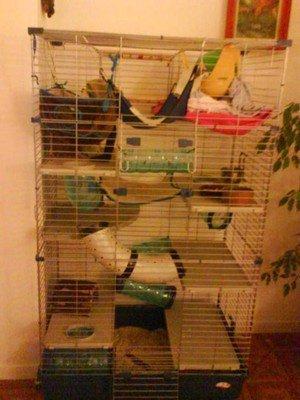 cage ratouss