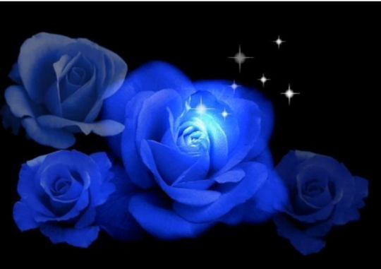 roses bleues Roses-roses-bleues-img