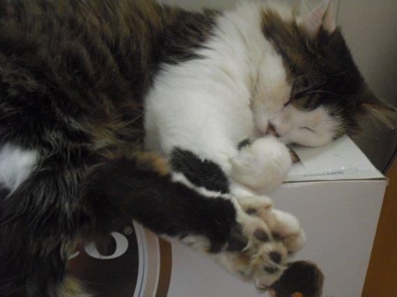 Je dors.