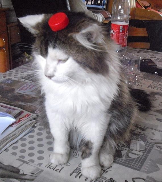 Vous êtes sérieux ? C'est quoi ça sur ma tête ?