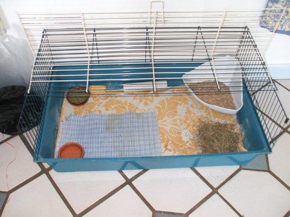 cage Fleya