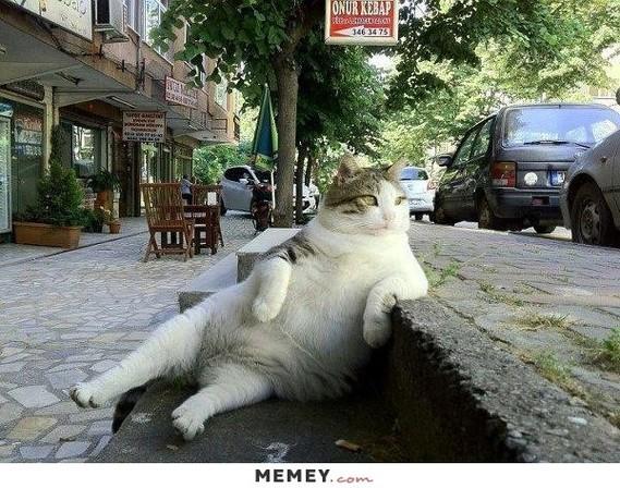 fat-lazy-cat-sitting
