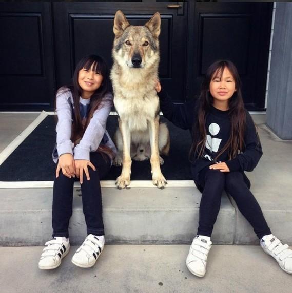 Jade-et-Joy-les-filles-De-Johnny-Hallyday-et-Laeticia-le-20-octobre-2016_exact1024x768_p