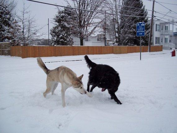 Diego et Scar 4 déc 2010