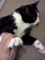 soft paws bleu