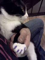 soft paws mauve