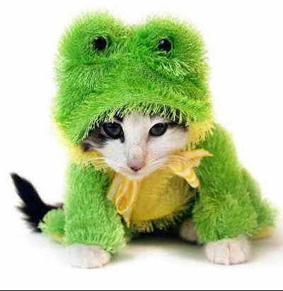 chat-grenouille