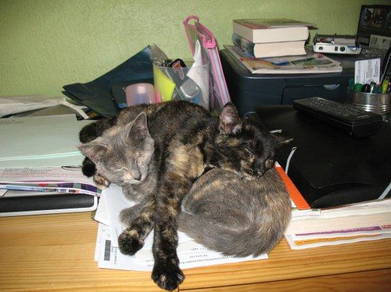 Ginette et Sheeba
