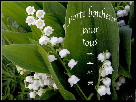 galerie-membre,fleur-muguet,muguet-jardin-bbb-dscn1600