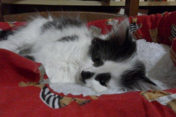 Fluffy.2