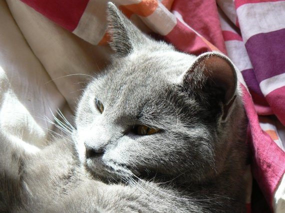 raoul male 2 ans